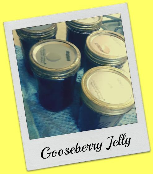 gooseberry jellly