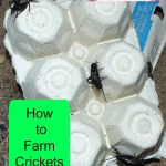 The Lad's Research: How to Farm Crickets