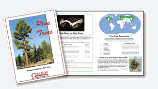 Pine Trees by Creation Illustrated, sample pages