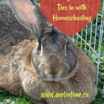 Raising Bunnies Ties in with Homeschooling