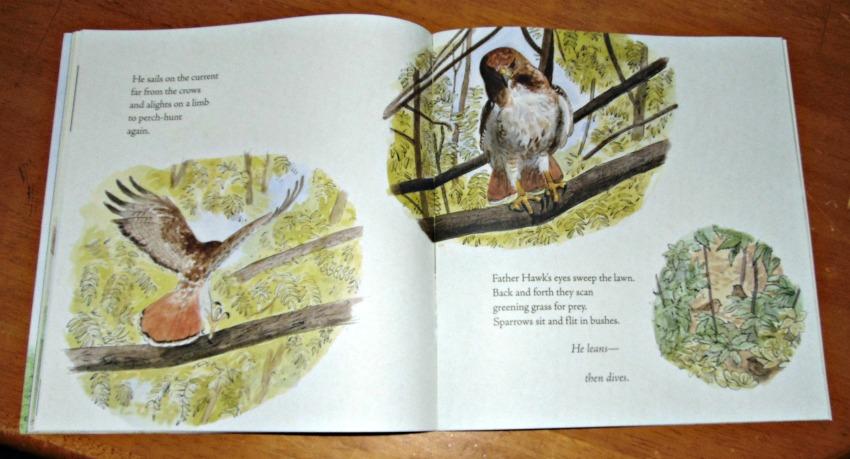 hawk rising, sample page