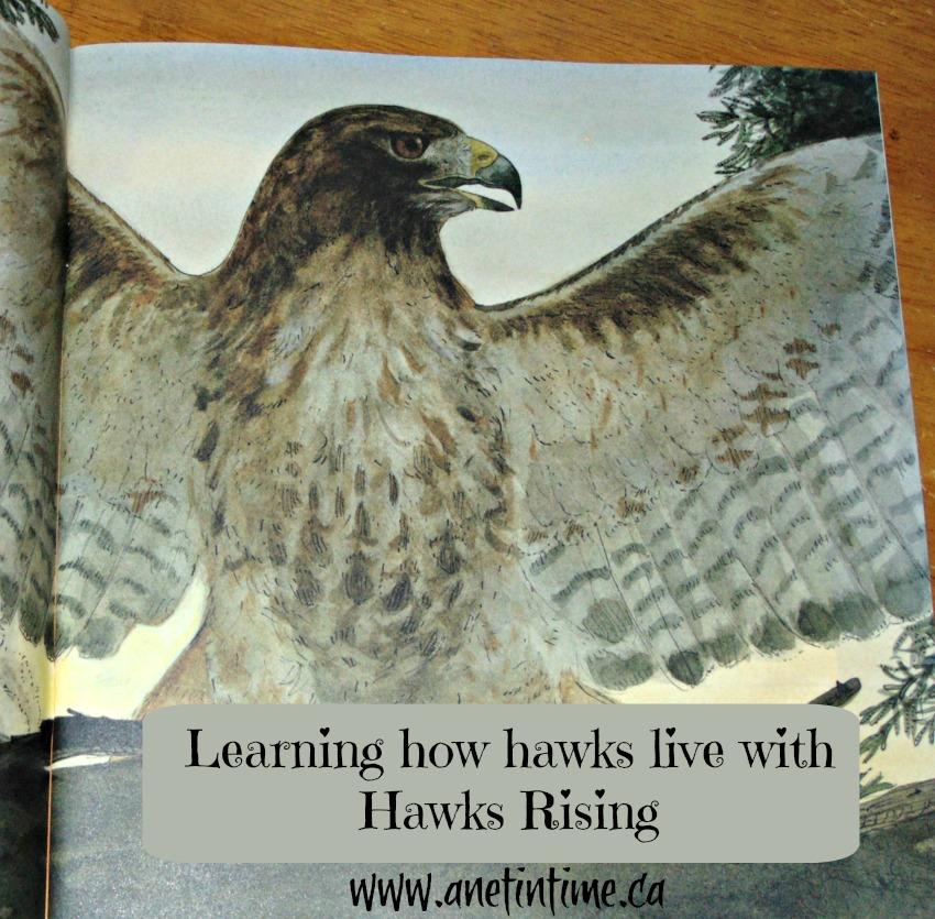 hawks Rising, my review