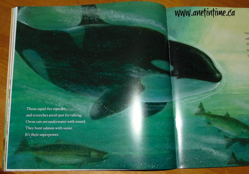 Wild Orca, hunting food image from book