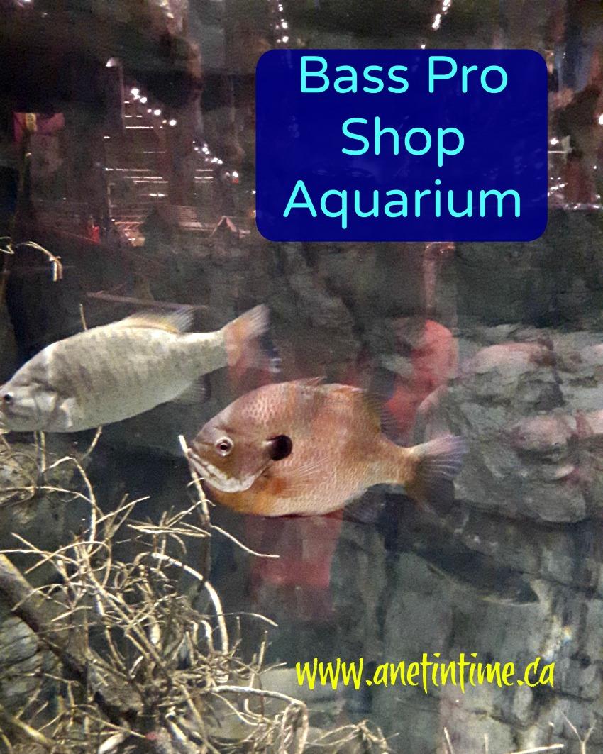 fish at bass pro shop aquarium