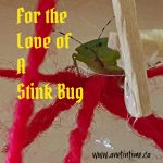 For the Love of a Stink Bug