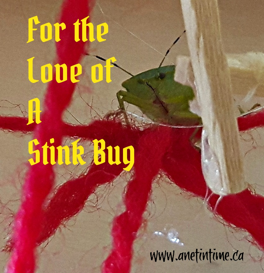 Stink Bug on red string