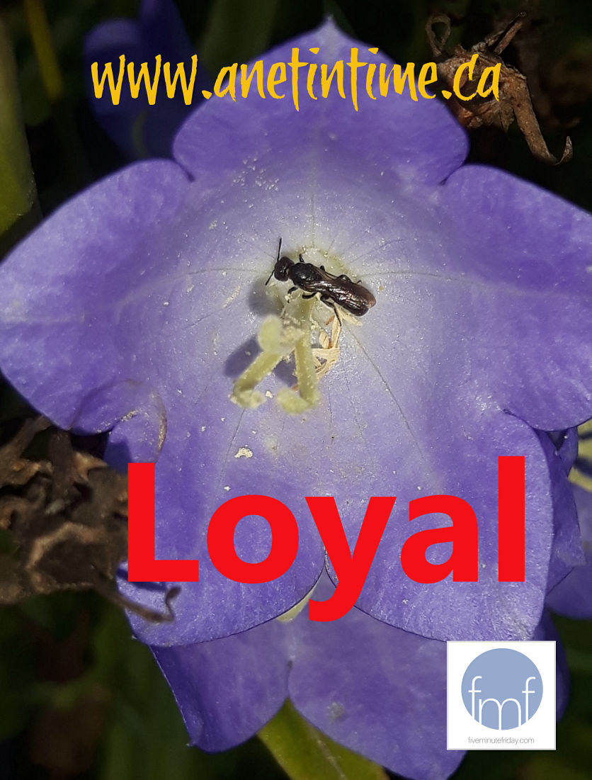blue flower with word LOYAL