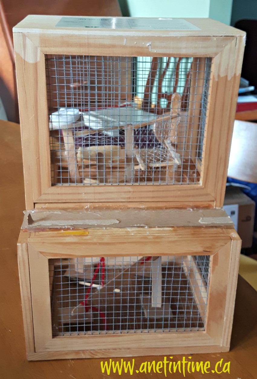 stink bug habitat