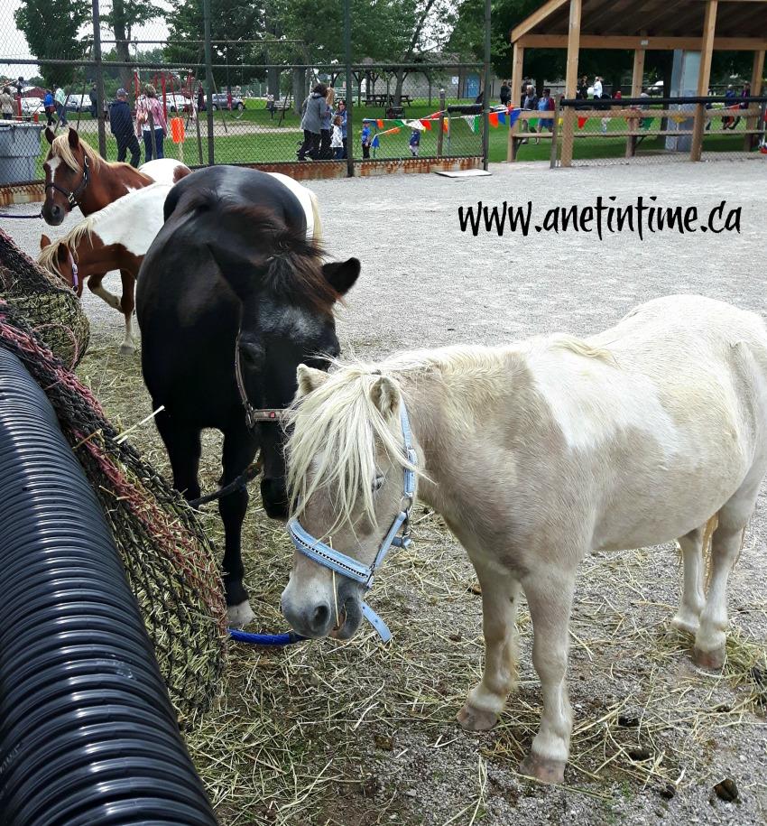 Kirkton Fair ponies
