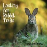 Looking for Rabbit Trails