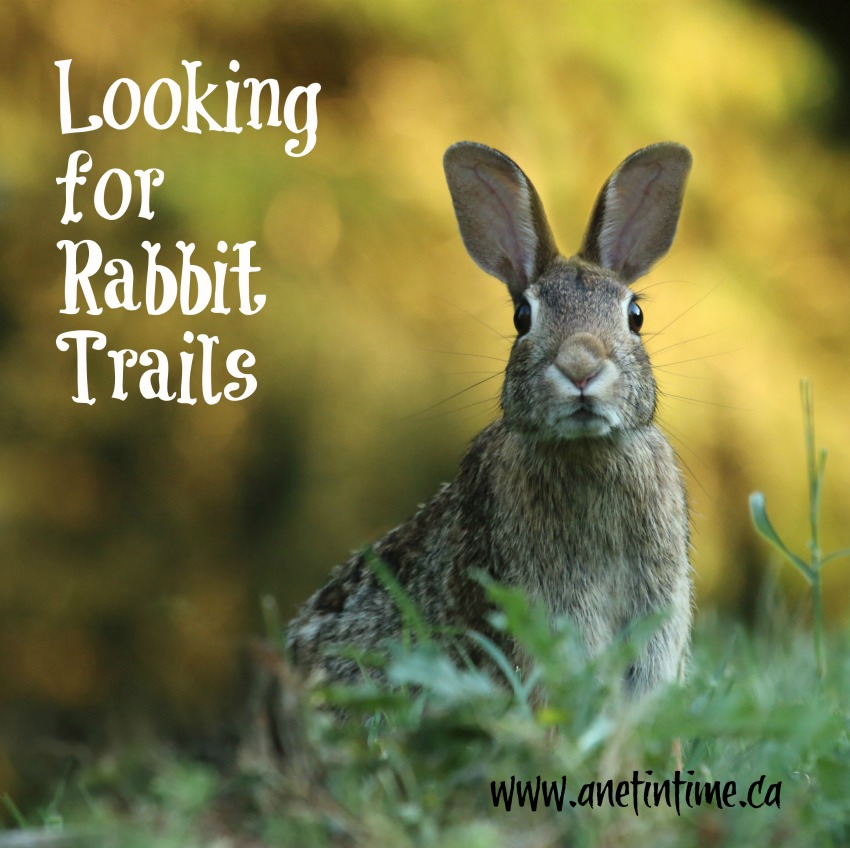 Rabbit looking, text looking for rabbit trails