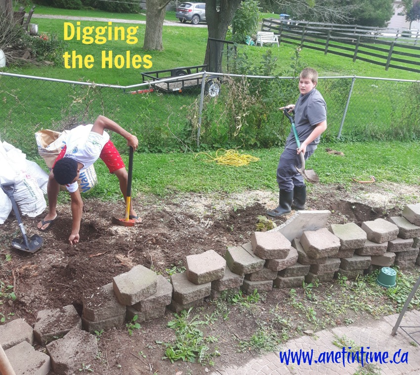 digging holes for fruit trees
