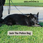 Jack the Police Dog