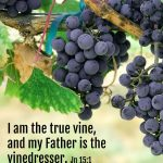 Jesus, The Vine