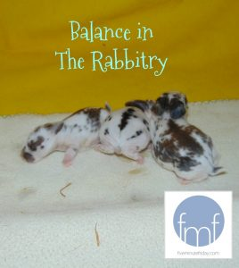 Balance in the Rabbitry