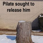 Pilate Sought To Release Him
