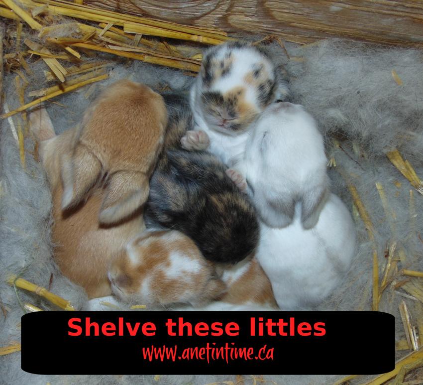 shelving babies