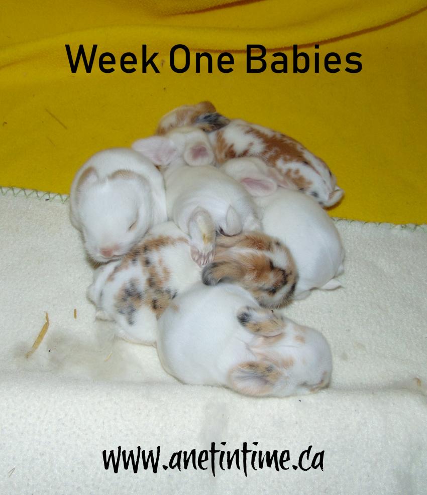 week old baby babies
