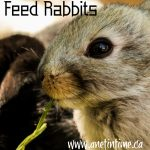 How to Feed Rabbits