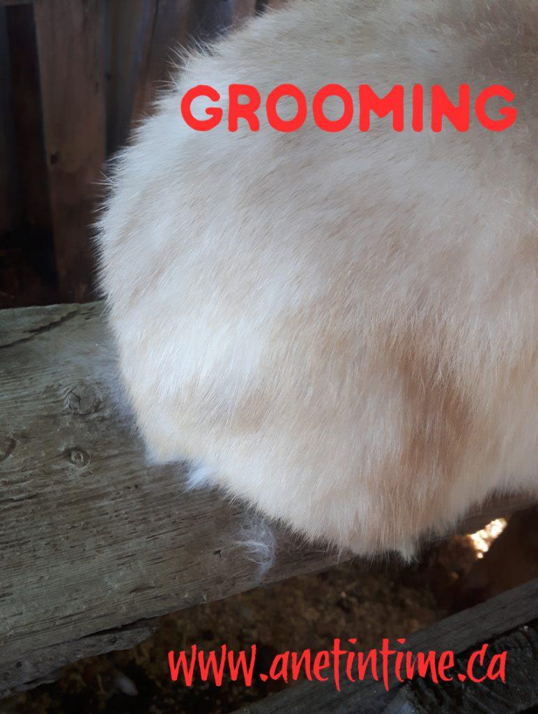 grooming rabbits