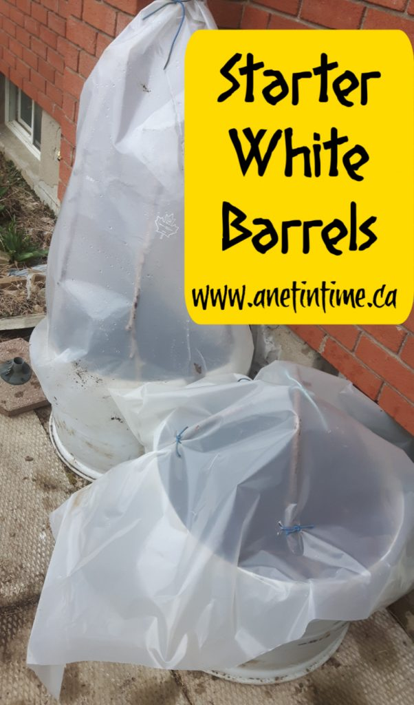 garden beds from white barrels