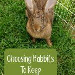 Choosing Rabbits to Keep