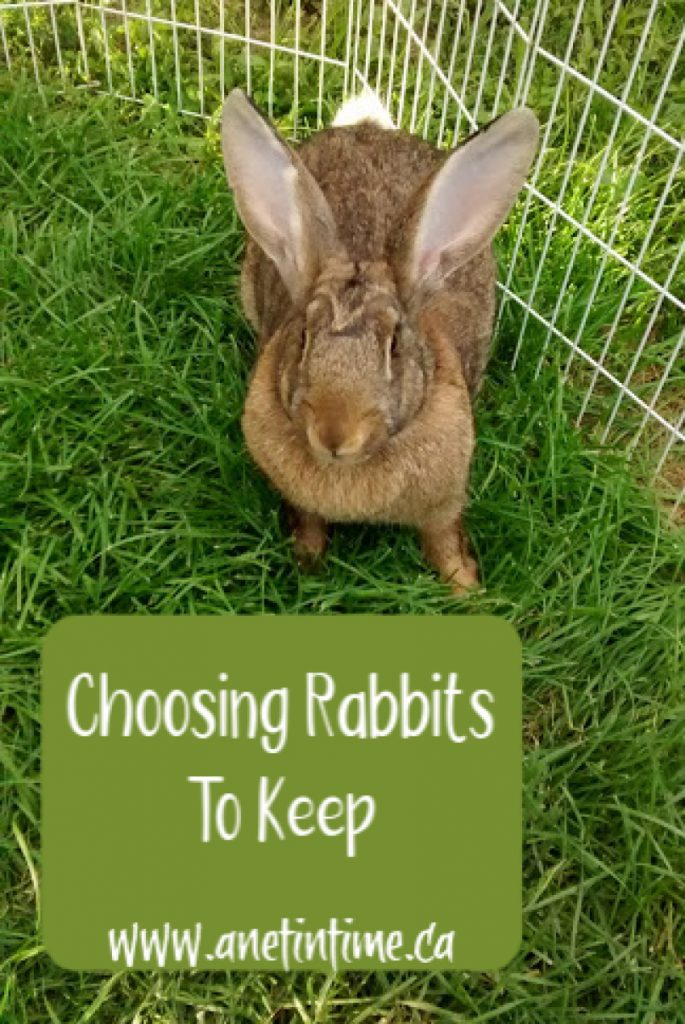 choosing rabbit to keep