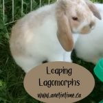 Leaping Lagomorphs