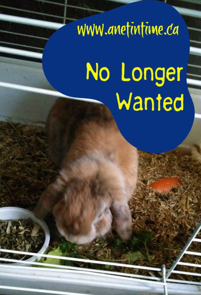 no longer wanted rabbits