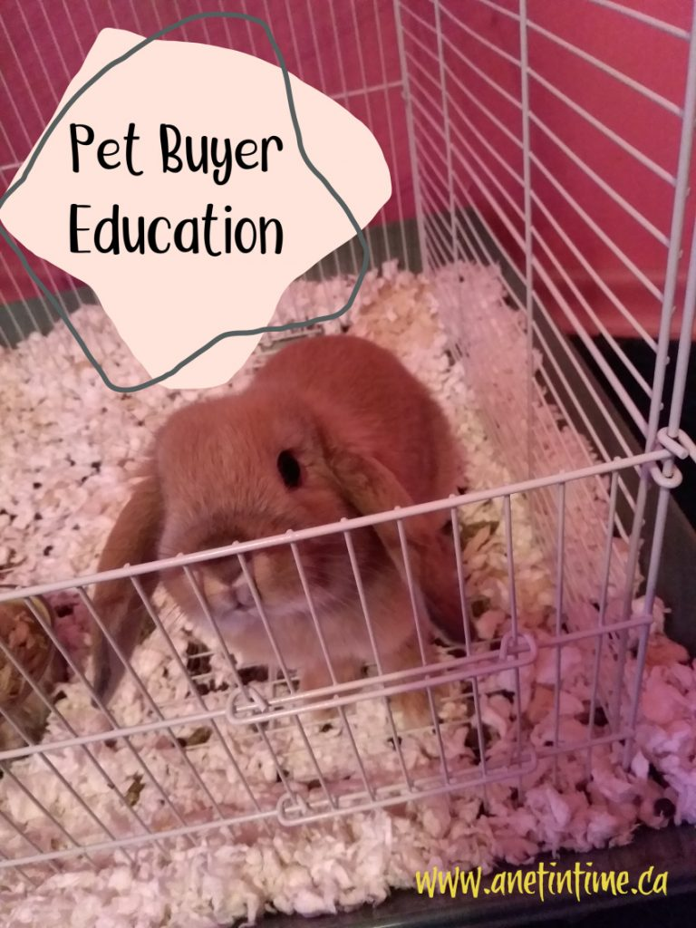Pet Buyer Education