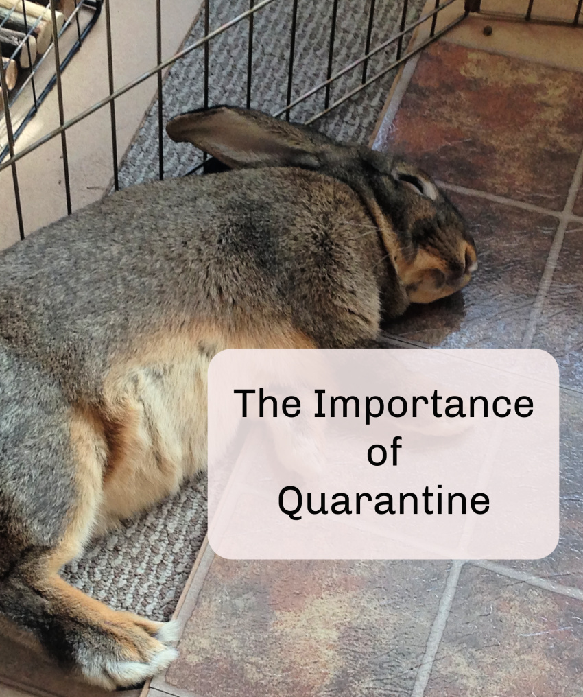 The importance of quarantine