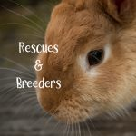Rescues and Breeders