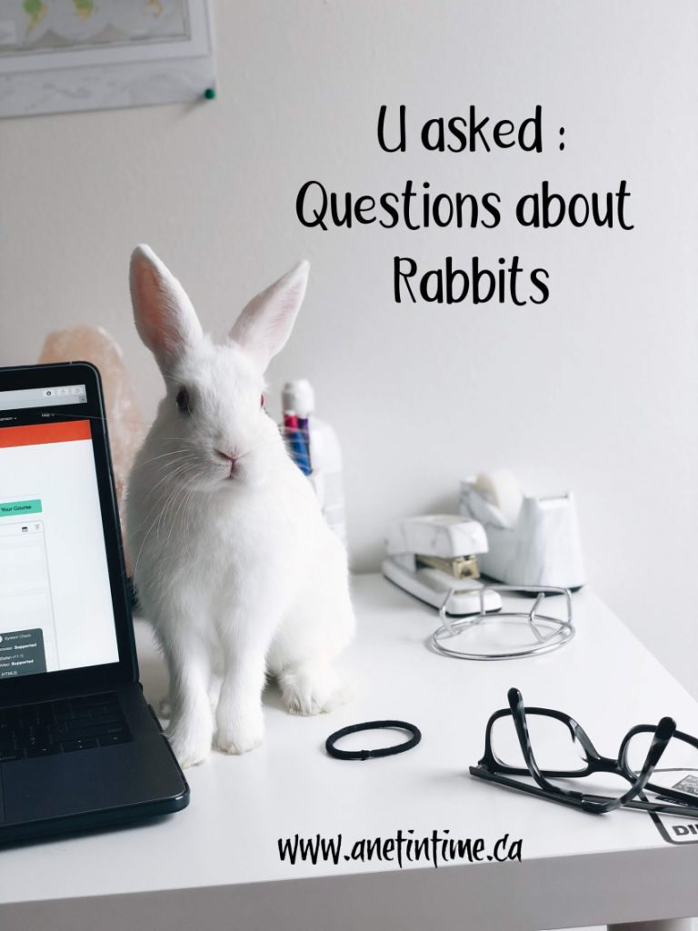 U asked questions about rabbits