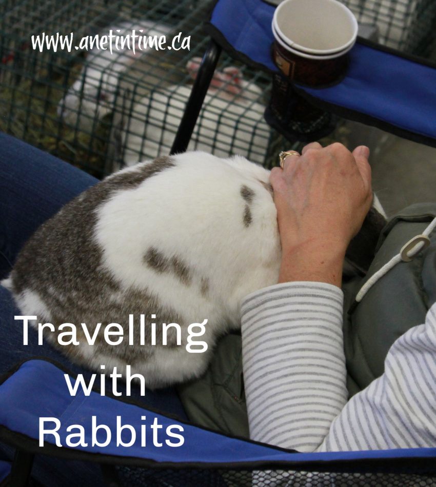 Travelling with Rabbits