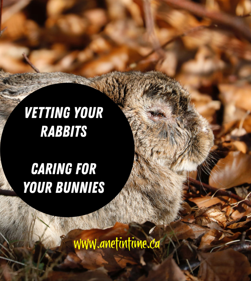 Vetting Your Rabbits
