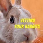 Vetting Your Rabbits