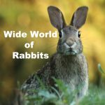 Wide World of Rabbits