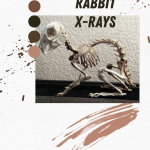 Rabbit X-rays