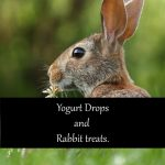 Yogurt Drops