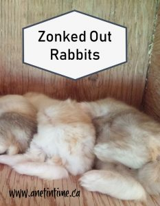 Zonked out rabbits