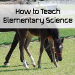 How to Teach Elementary Science
