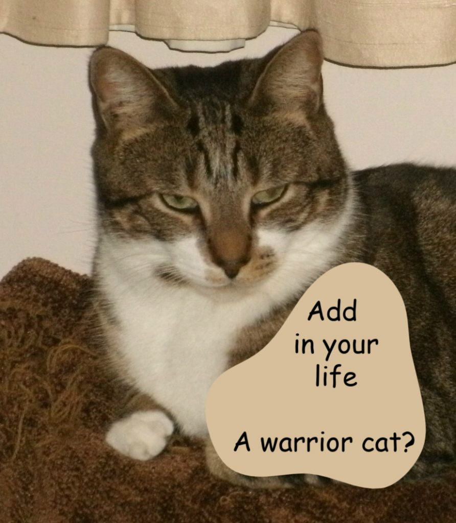 Warrior cat