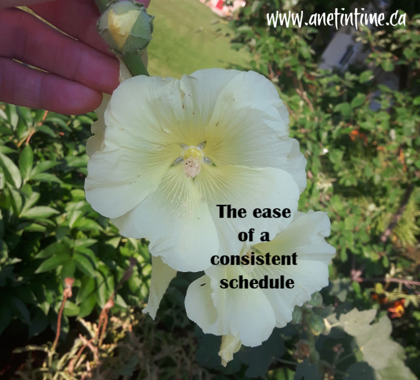 The ease of a consistent schedule