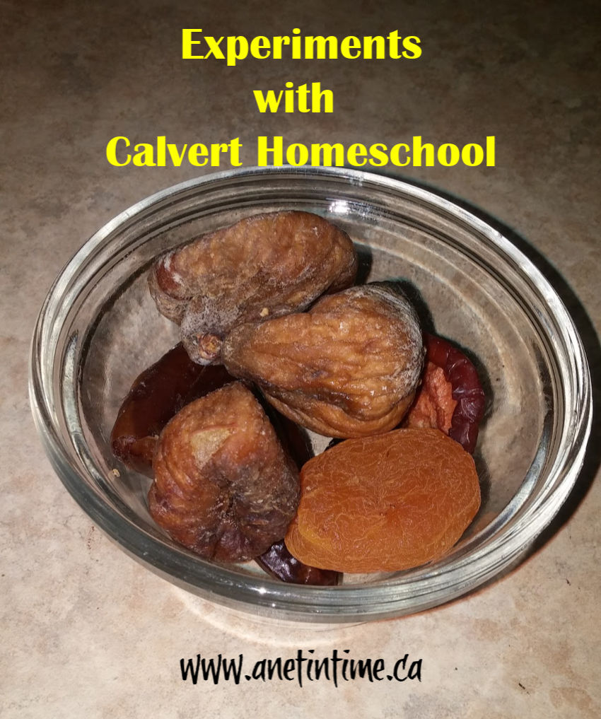 Experiments with Calvert Homeschool
