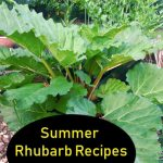 Summer Rhubarb Recipes