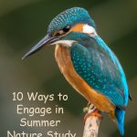 10 Ways to Engage in Summer Nature Study