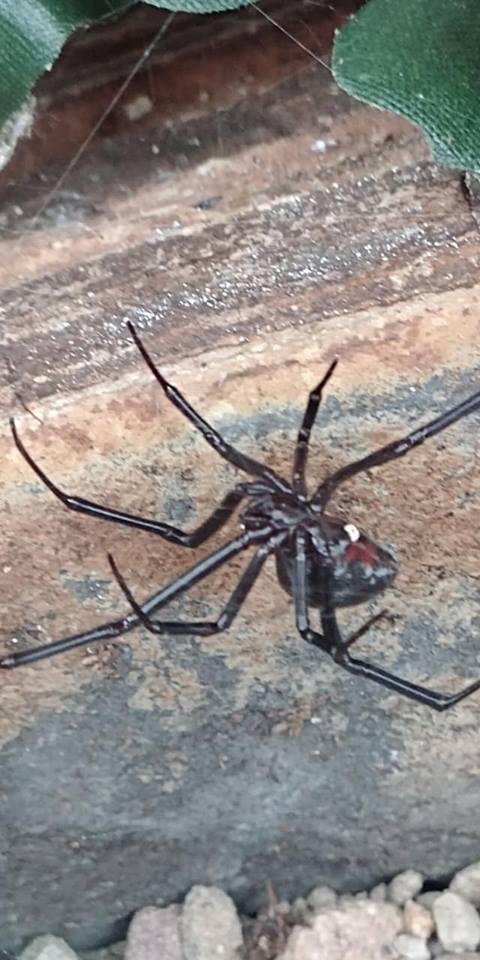 Spiders Alive RBG