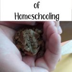 The Best Memories of Homeschooling