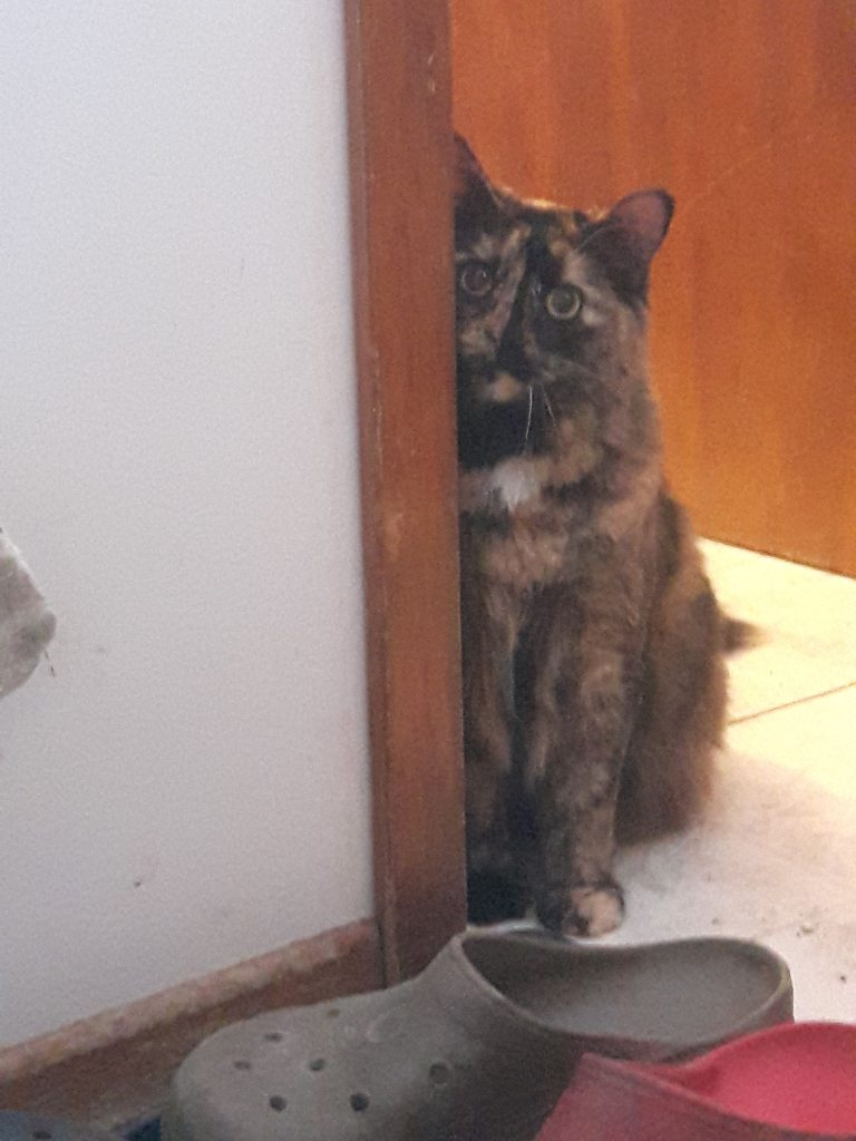 Tortieshell cat sitting by door frame