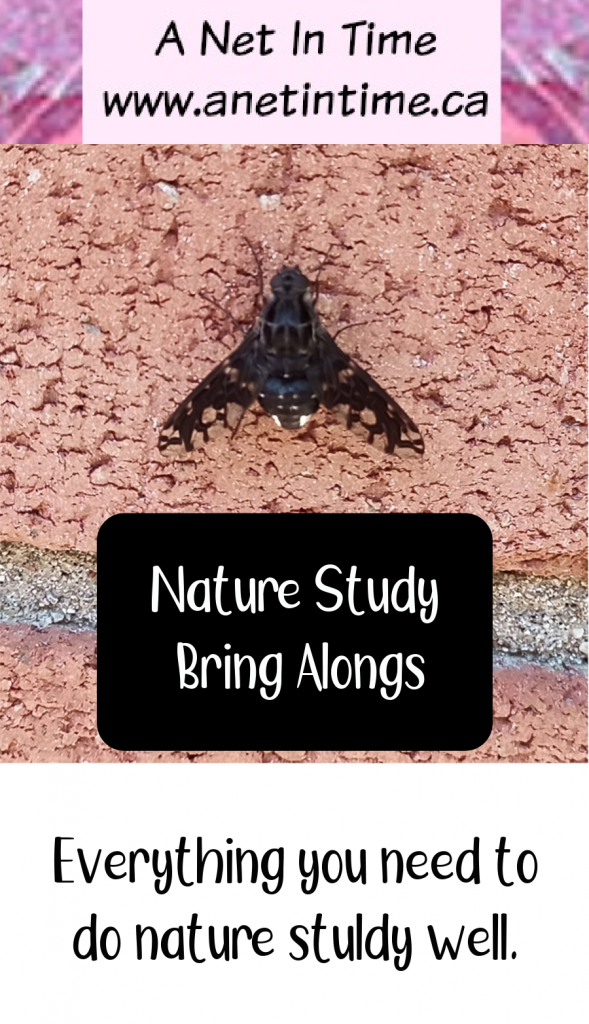 Nature Study Bring Along, tiger bee fly on a wall